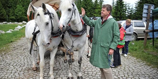 Kolejny dzień końskich badań