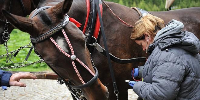 Morskie Oko: Większość koni może pracować