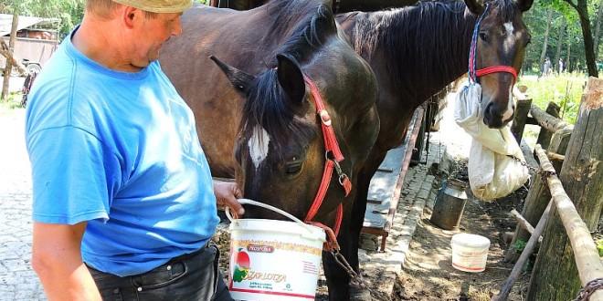 Przegrzanie koni na trasie do Morskiego Oka – fakty