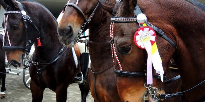 """Wideorelacja z rozpoczęcia konnej pielgrzymki """"Via della Misericordia"""""""