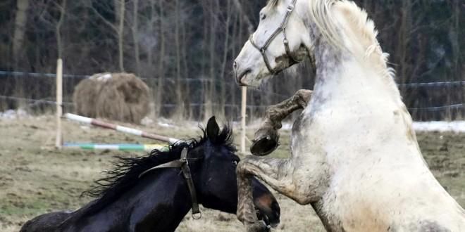 Koński relaks i odpoczynek w Białce Tatrzańskiej