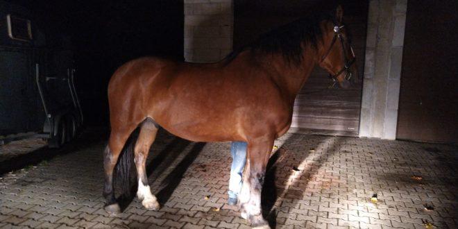 Protokół z badania oraz nagranie ukazujące kondycję konia po zdarzeniu z dnia 22.08.2019r.