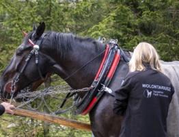 Informacja dotycząca wykonanych komisyjnych badań koni pracujących na drodze do Morskiego Oka